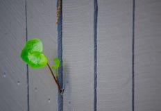 Barrière de Grey Timber avec la feuille verte simple d'arbre photos stock