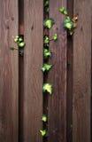 Barrière de jardin Photo stock