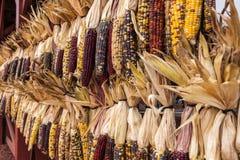 Barrière de maïs Photos libres de droits