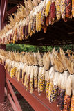 Barrière de maïs Photo libre de droits