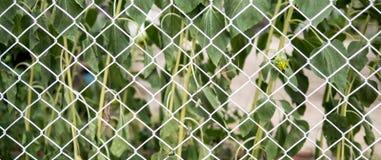 Barrière de maillon de chaîne devant des arbres Images stock