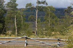 Barrière de rail avec la neige, automne tôt au Wyoming Images stock