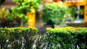 Barrière des buissons en parc vert sur la pluie de temps vidéo clips vidéos