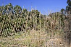 Barrière en bambou Photo libre de droits