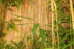 Barrière en bambou avec le bambou frais Image stock