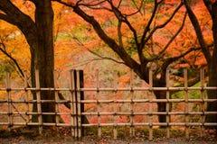 Barrière en bambou avec le fond de feuille d'érable photos stock