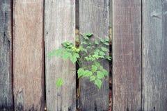 Barrière en bois avec des arbres Fond photographie stock