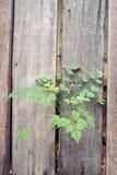 Barrière en bois avec des arbres Fond photo stock