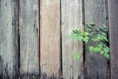 Barrière en bois avec des arbres Fond photos stock
