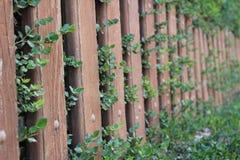Barrière en bois avec des feuilles et des usines là-dessus Images stock