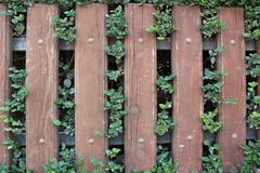 Barrière en bois avec des feuilles et des usines là-dessus Photos stock