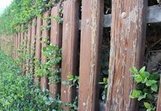 Barrière en bois avec des feuilles et des usines là-dessus Photo libre de droits