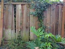 Barrière en bois avec la végétation Photos stock
