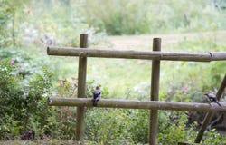 Barrière en bois avec le geai eurasien photo stock