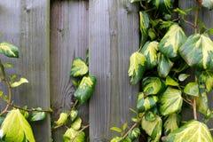 Barrière en bois avec une usine Photo libre de droits