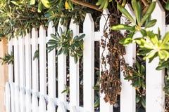 Barrière en bois blanche de style du comté Barrière blanche dans la perspective photos stock