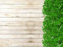 Barrière en bois couverte d'usines avec l'espace de copie Photographie stock