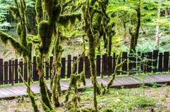Barrière en bois dans la forêt de jungle Photographie stock