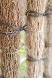 Barrière en bois en bambou Image libre de droits