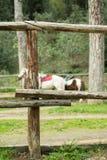 Barrière en bois stable, chevaux à l'arrière-plan Images libres de droits