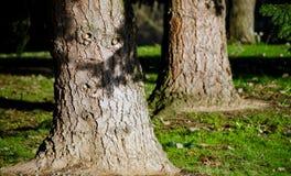 Barrière en bois superficielle par les agents cassée Photographie stock libre de droits
