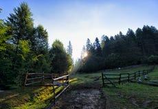 Barrière en bois typique pour des moutons frôlant avec l'herbe verte propre Photo libre de droits
