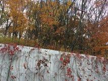 Barrière en métal, arbres, feuilles d'érable Photographie stock