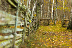 Barrière et chemin dans les bois image libre de droits