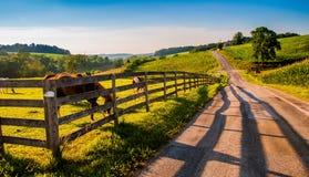 Barrière et chevaux le long d'un backroad de pays dans le comté de York rural, Photo stock