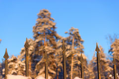 Barrière et forêt Photo libre de droits
