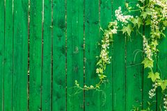 Barrière et usine en bois vertes Photo stock