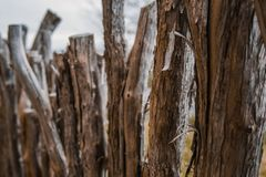 Barrière faite maison d'acacia fabriquée à partir de le bois au Nouvelle-Zélande photo libre de droits