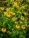 Barrière Gardening Images libres de droits