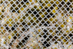 Barrière glaciale Photos stock