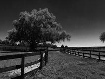 Barrière Line de ferme de cheval avec l'arbre et le x28 ; &white& noir x29 ; Photographie stock libre de droits