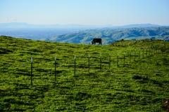 Barrière pour la vache sur la montagne verte Photographie stock