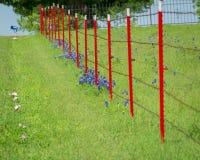 Barrière rouge de barbelé dans un domaine de Bluebonnet Images libres de droits