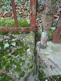 Barrière rouillée avec de la mousse Images stock