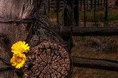 Barrière rustique Post With Wildflowers Photo libre de droits