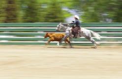 Barrière Work Horse et vache Photographie stock