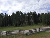 Barrières au chemin forestier photographie stock libre de droits
