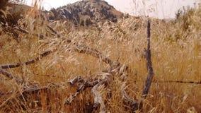 Barrières de foin et de bois mort de désert photo stock
