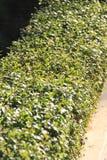 Barrières de haie de jardin de la maison, foyer au centre photographie stock libre de droits