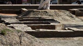 Barrières plantées d'arbre et de brique banque de vidéos