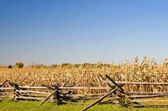Barricada de la guerra civil, campo de maíz y cielo del otoño Fotografía de archivo libre de regalías