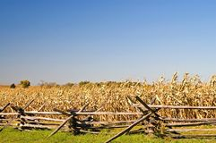 Barricade de guerre civile, champ de maïs et ciel d'automne photographie stock libre de droits