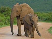 barrie słonie Marion Zdjęcia Stock