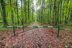Barrier on the path in the green, beautiful forest Stock Image