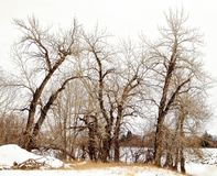 Barrier trees on Canadian Farmland. Farmland woods in the Canadian foothills skirting the Rocky Mountains Royalty Free Stock Photography