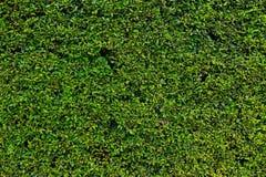 Barriera con i fogli verdi Fotografie Stock